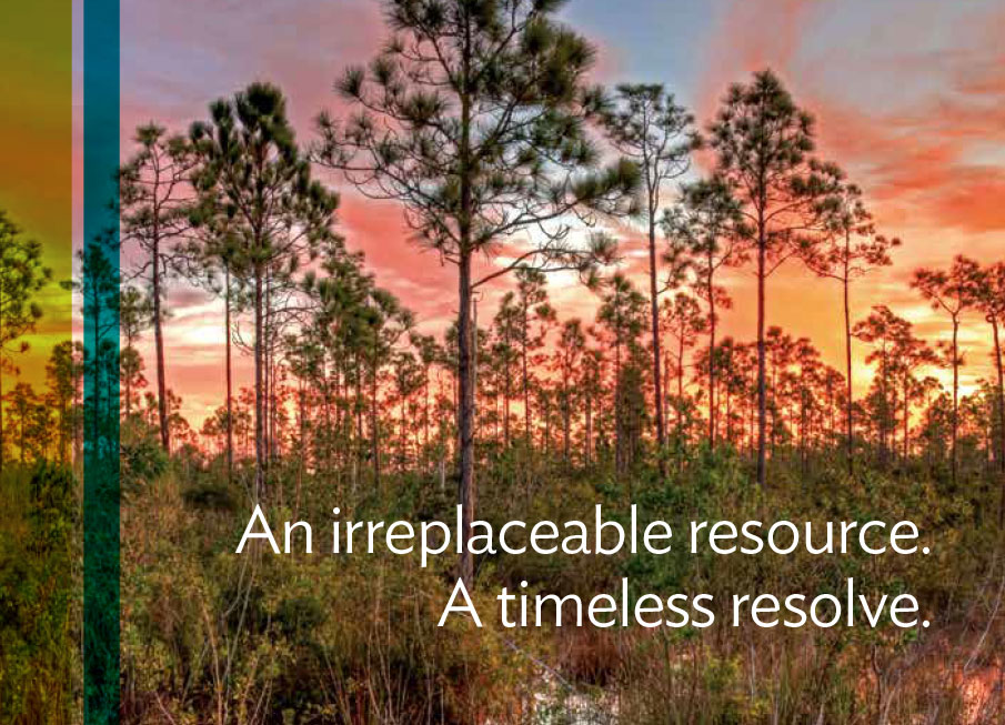 Everglades Foundation Brochure